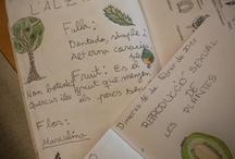 Quadern de camp / Observació de l'entorn proper / by Rosa Soler