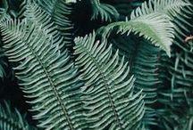 COLOR | Greens