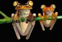 Frogs  / by Robyn Jones