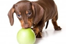 Home made tasty dog food / Homemade tasty dog food to make for your favorite wagging dog! Tips, ideas and great treats too.