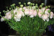 "Christian Tortu, Paris / ""He's the Yves Saint Laurent of flowers!"""