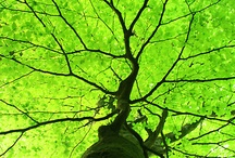 ...this living thing... / the beauty of the tree / by Teresa....a seeker