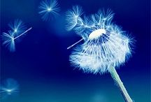 I WISH... / Such Beauty In a Weed / by Teresa....a seeker