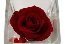 Trandafiri naturali stabilizati / Cel mai minunat cadou: un trandafir natural care o va incanta minim 3 ani :)