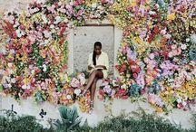 Photography   Photos I Just Love / by Tosha Terpilowski