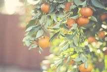 Color   Orange / by Tosha Terpilowski