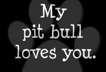 Pit Bulls and Puppies / by Rosemary Mazzeo