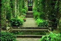 secret garden / by Zinara Brooklyn