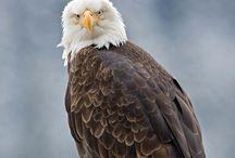 Fauna / Fotografías de animales, insectos y todo lo que nos rodea en el mundo.