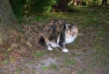 Kitties! / by Donna True