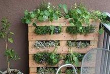 Gardening / by Katie Peters