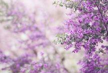 Ꭿ Ꮗalk Ꭵn Ɲaturҽ ⊰✿☼❀⊱ / Wonder in everything we see..... / by Judy Madaris •*¨*•.¸¸🌺