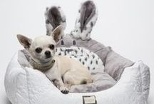 Kingoos - Quality for Dogs / It's all about Pet Style! See KINGGOS products, a Spanish manufacturer of fashion and accessories of high quality for pets.
