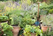 The Herb Garden / Discover The Herb Garden. A quirky tapestry of fragrant foliage, entwined with flowers and fruit. / by Jo Malone London