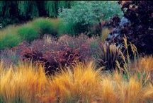 garden / by Clora O Neill