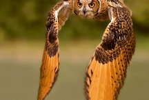 owl obsession  / by Laura Laubach-Richardson