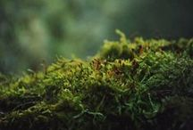 Bryophyta / Awesome 12000 species of Moss from around the world / by Fabio R
