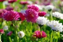 "Spring ""Jaro"""