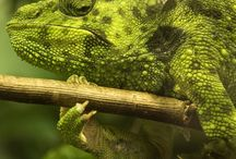 Reptiles / All things scaly and beautiful / by Sue Stone