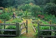 My favorite...Vegetable gardens / gardens, vegetable gardens