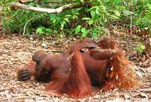 Wanderlust...Borneo
