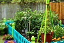 Gardening Veggie & Flower / by Abby Lesniak