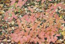 Seasons - Autumn / by Patricia McLinn
