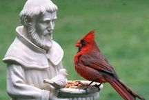 Cardinal Enchantment... / Photographic and artistic images of cardinals / by SPL