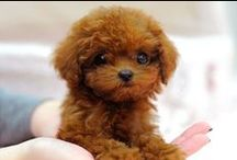 Pups / Little dogs that are just too cute