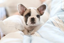 """Cutesville / things that make me go """"aww"""", mostly relating to puppies & kids. / by Sweet Kiera"""