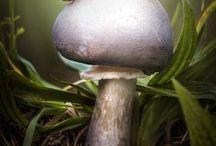 Beauty Little Nature