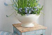 Blue at Home&Garden