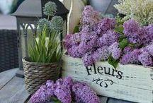 Purple at Home&Garden