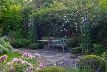 Boxwood&Hedge