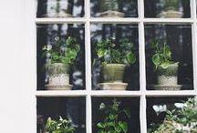 Green / by Dinara Shaibakova
