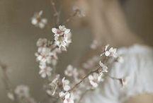 White Belle