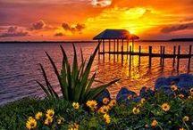 Orange Scenery