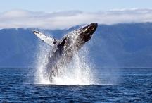 Whales / by Emily Luke