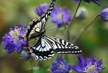 Butterflies / by Aida Lopez Fortier