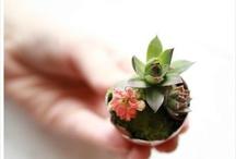A Garden Mini / Gardening even in small spaces