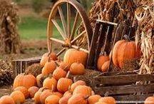 Autumn / by Briana Budgin
