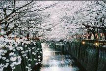 Japan Dreaming. / by Talya Goldberg