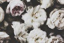 Flower Power. / by Talya Goldberg