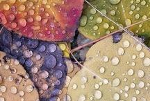 Nature in Photography / by Leah MacFarlane Daniel