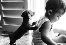 Pets in Photography / by Leah MacFarlane Daniel