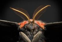 aNiMaLia ~ A BuG's LiFE 2 / Crazy creatures of planet Earth / by ~ KaiZeN ~