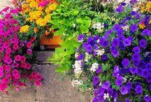 gardens / by Gabriela Crow