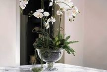 Vases / Vases for Orchids