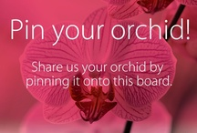 Pin your Orchid! / Want to share your orchids with us? Gain access by leaving a comment on a pin or sending an e-mail to orchidsnl@gmail.com.