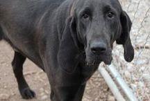 Dog - Riley